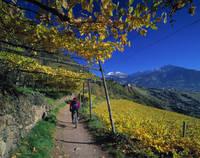 イタリア 南チロル 自転車に乗る人