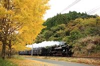 熊本県 銀杏とSL人吉
