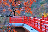 新潟県 小雨の弥彦公園 紅葉と観月橋