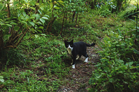 庭に来たハチワレ猫