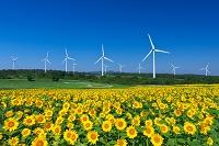 福島県 ヒマワリと風力発電