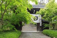 京都府 光明寺 総門と新緑の表参道