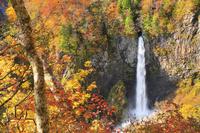 岐阜県 朝の白水の滝と紅葉
