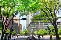 緑のビジネス街