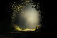 森に差し込む光