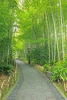静岡県 修禅寺街と竹林の小径