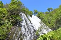 北海道 知床 新緑のオシンコシンの滝