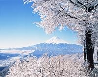 山梨県 富士山と樹氷
