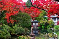 栃木県 紅葉の輪王寺逍遥園
