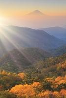 山梨県 山梨市 乙女高原 朝焼けの富士山と黄葉の山並み
