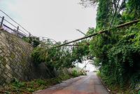 千葉県 倒木 台風被害