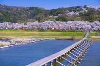島根県 斐伊川桜並木