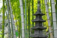 石灯籠と竹林