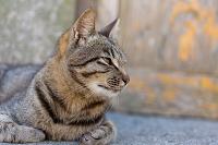 愛媛県 青島の猫