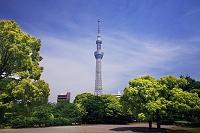東京都 墨田区 東京スカイツリー