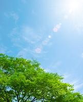 木と太陽光