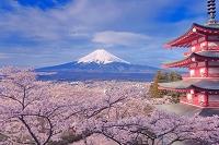 山梨県 富士山とサクラと五重塔