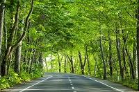青森県 新緑の道