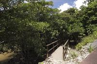 沖縄県 西表島 大見謝ロードパーク