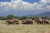 ケニア サンブル県 サンブール国立保護区