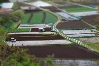 レタス畑 収穫