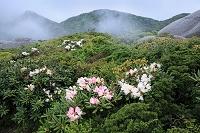 鹿児島県屋久島 黒味岳