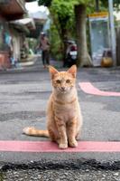 台湾の路上に座る猫