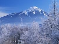 長野県 カラマツ霧氷と蓼科山