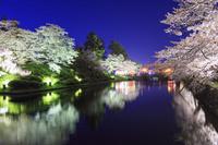 山形県 米沢市 松が岬公園(米沢城址) 夜桜