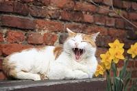 イギリス 猫