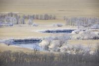 北海道 釧路川と釧路湿原の霧氷