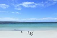 フォークランド諸島 ジプシー入り江 ペンギン