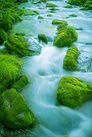 青森県 渓流と苔むした岩