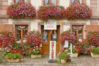 フランス べルグハイム 花でいっぱいのお店