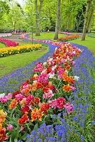 オランダ キューケンホフ公園