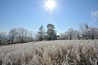 愛知県 茶臼山高原