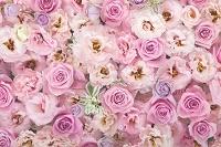 沢山のバラの花、その他