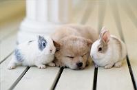 ミニウサギと子犬
