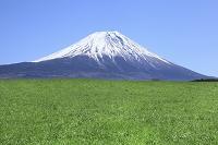 静岡県 朝霧高原 富士山と緑の草原