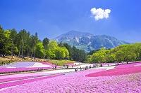 埼玉県 羊山公園の芝桜と武甲山