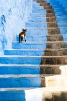 モロッコ シャウエン 階段を上る猫
