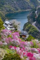 高知県 花桃咲く花の里公園