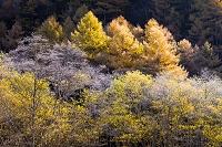 長野県 上高地紅葉