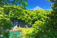 静岡県 富士山と白糸の滝