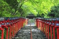 京都府 貴船神社 本宮参道の石段と灯籠