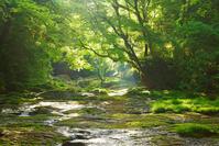 新緑の菊池渓谷