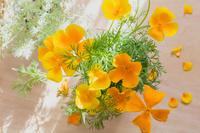 エスコルチアの花と日差し