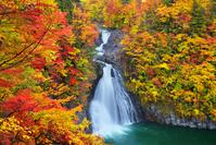 秋田県 紅葉の法体の滝