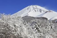 静岡県 水ヶ塚公園富士