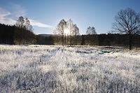 北海道 十勝三股の日の出と霜